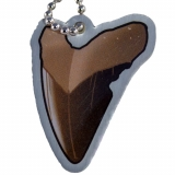 EarthCache™ Fossil Tag Tooth