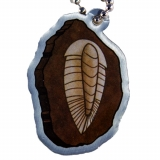 EarthCache™ Fossil Tag Trilobite